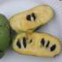 Kép 3/5 - Indián banán, Pawpaw